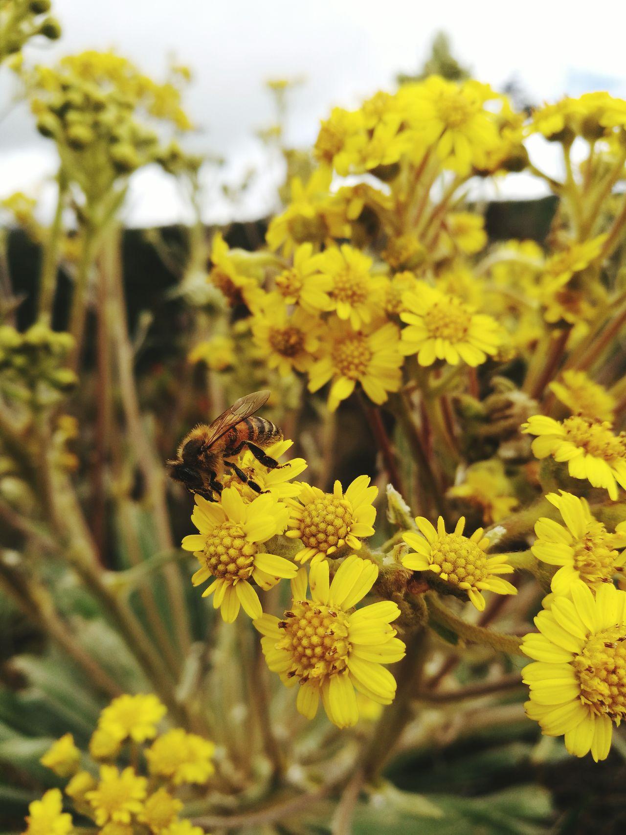 Colour Of Life Foto tomada a los alrededores de la laguna de Guatavita, cuna de la leyenda del dorado, ubicada en Cundinamarca, Colombia. En una parte del recorrido encontramos un monton de abejas recolectoras... un muy buen sitio para visitar en Colombia