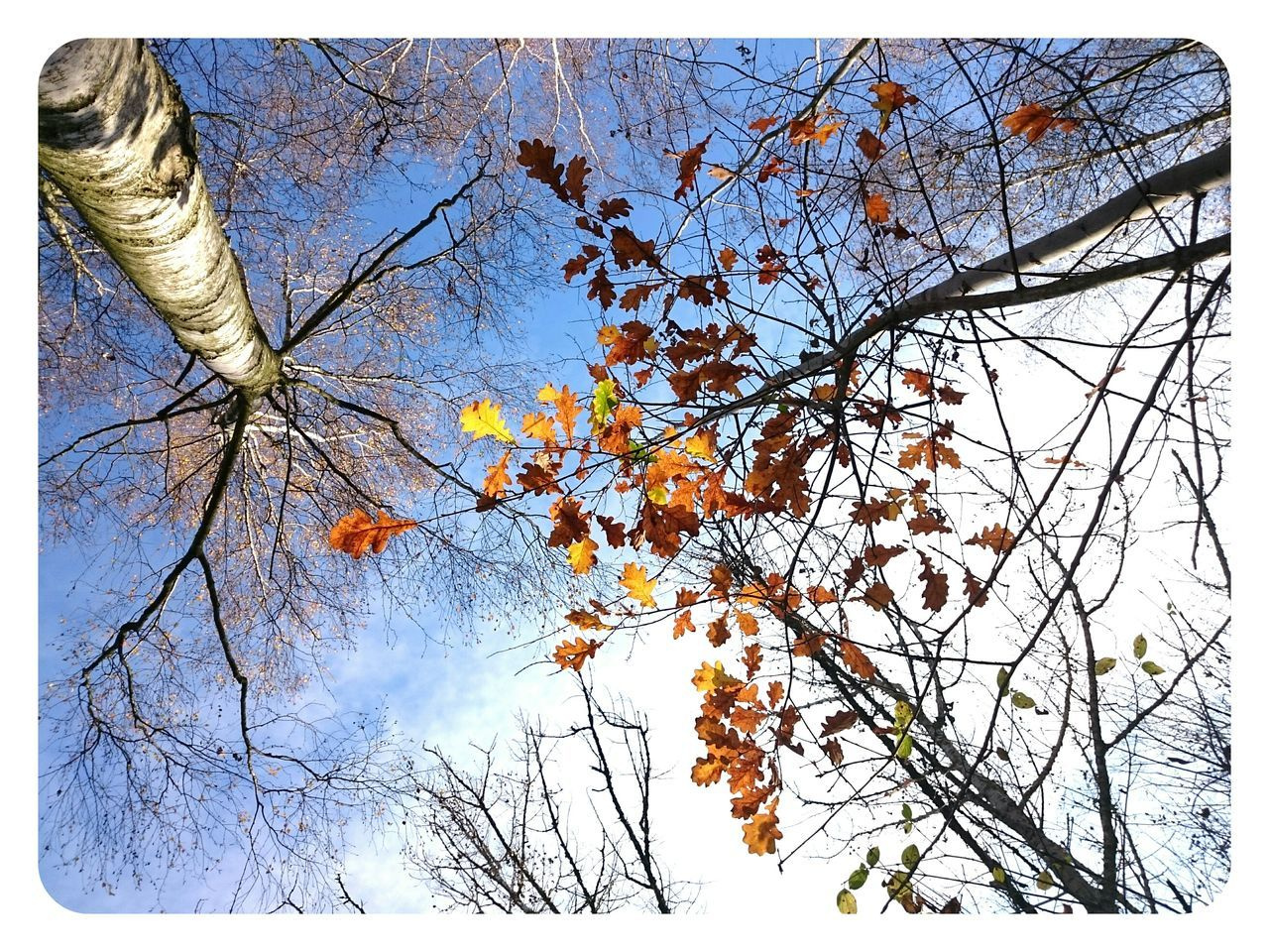 branch, tree, bare tree, nature, beauty in nature, low angle view, growth, autumn, sky, day, outdoors, tranquility, no people, springtime, fragility, leaf, flower, scenics, freshness, close-up
