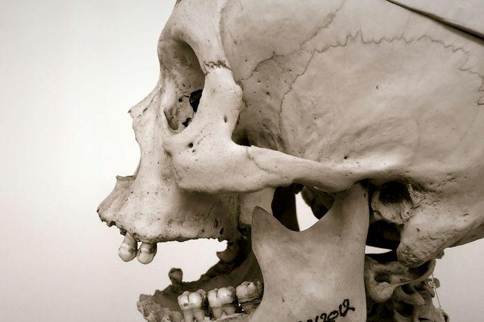 But bare bones Skeleton Anatomybuddy Orthopedics Skulls And Bones Close-up Haloween Eyesocket Medicine Horror And Macabre Nature Bonestructure Human Body Part Amazing Work Of Art