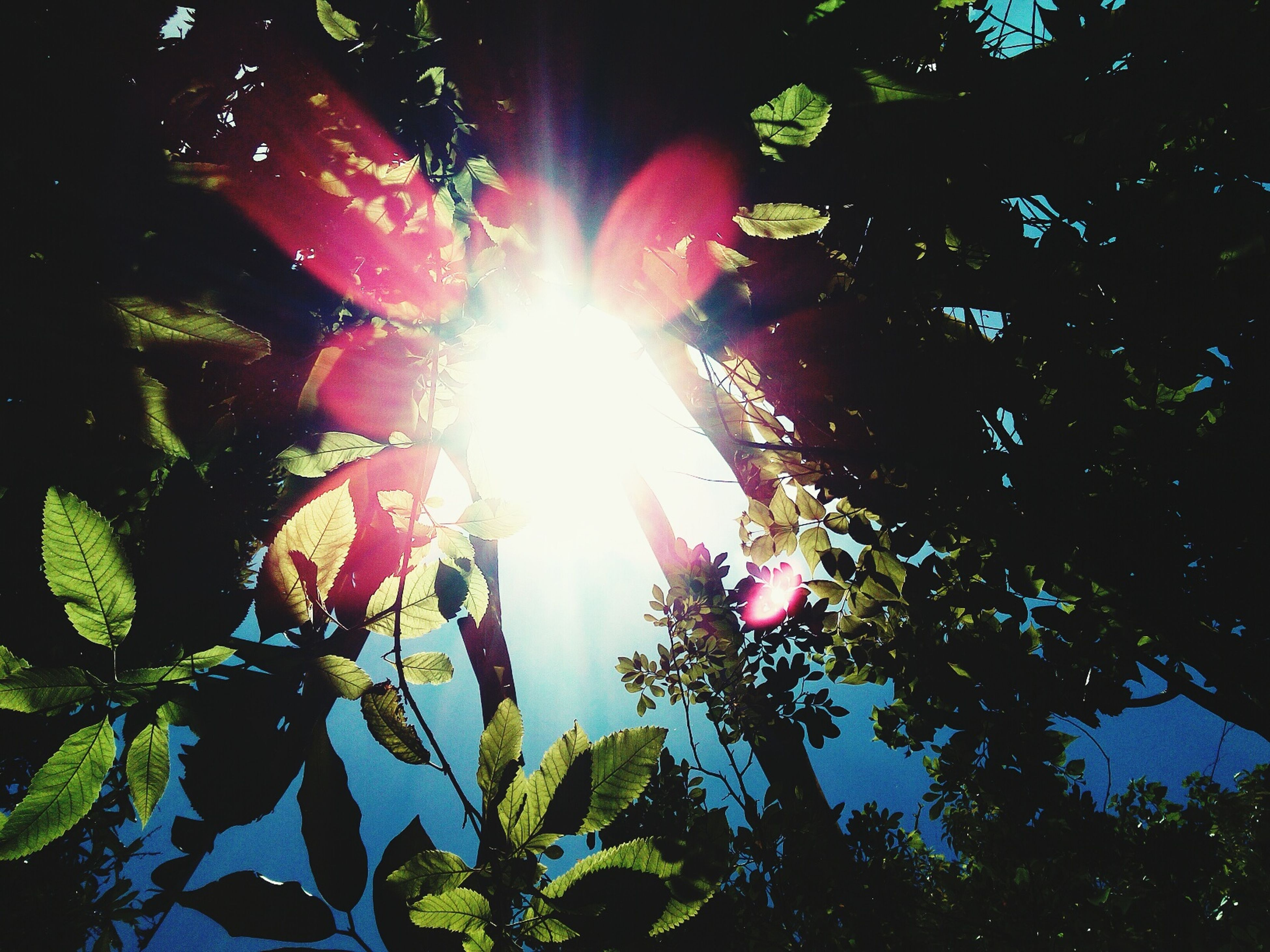 sun, sunbeam, sunlight, lens flare, tree, low angle view, growth, beauty in nature, nature, bright, leaf, sunny, tranquility, back lit, branch, sky, day, green color, outdoors, no people
