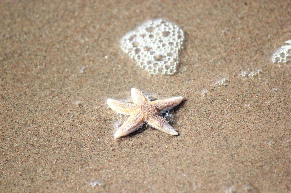 Beautiful stock photos of starfish, Animal Themes, Animals In The Wild, Beach, Close-Up