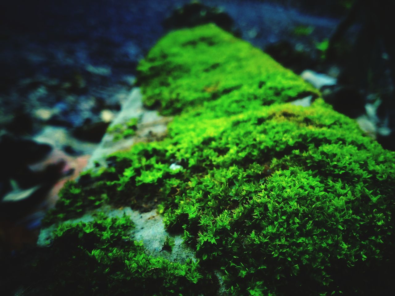 green color, moss, rock - object, nature, no people, close-up, day, outdoors, textured, beauty in nature, freshness