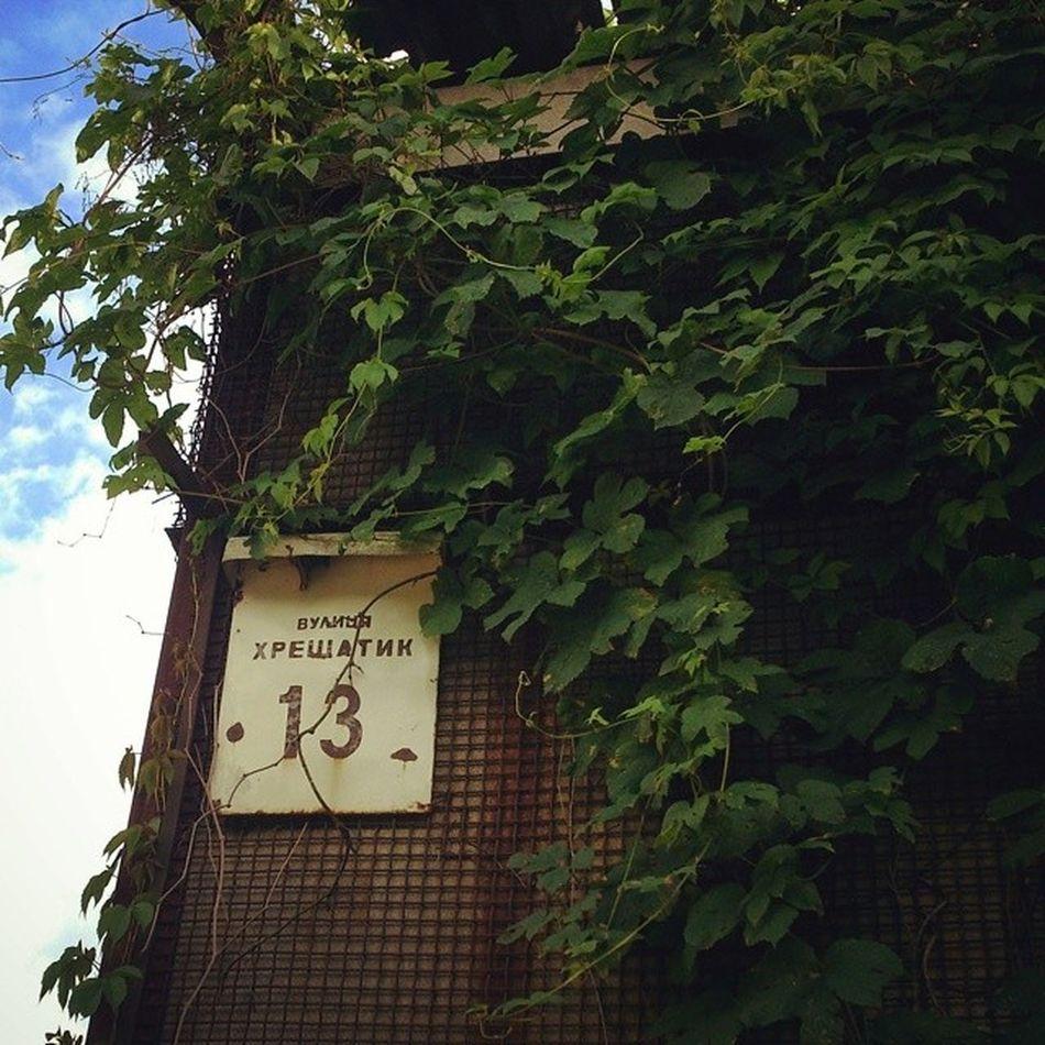 Крещатик у каждого свой или Когнитивные диссонансы Сырца сырец Киев город Syrets forest forest_trip лес дневник_наблюдателя kiev insta_kiev kievblog thekievblog wowkiev kievgram природа nature крещатик