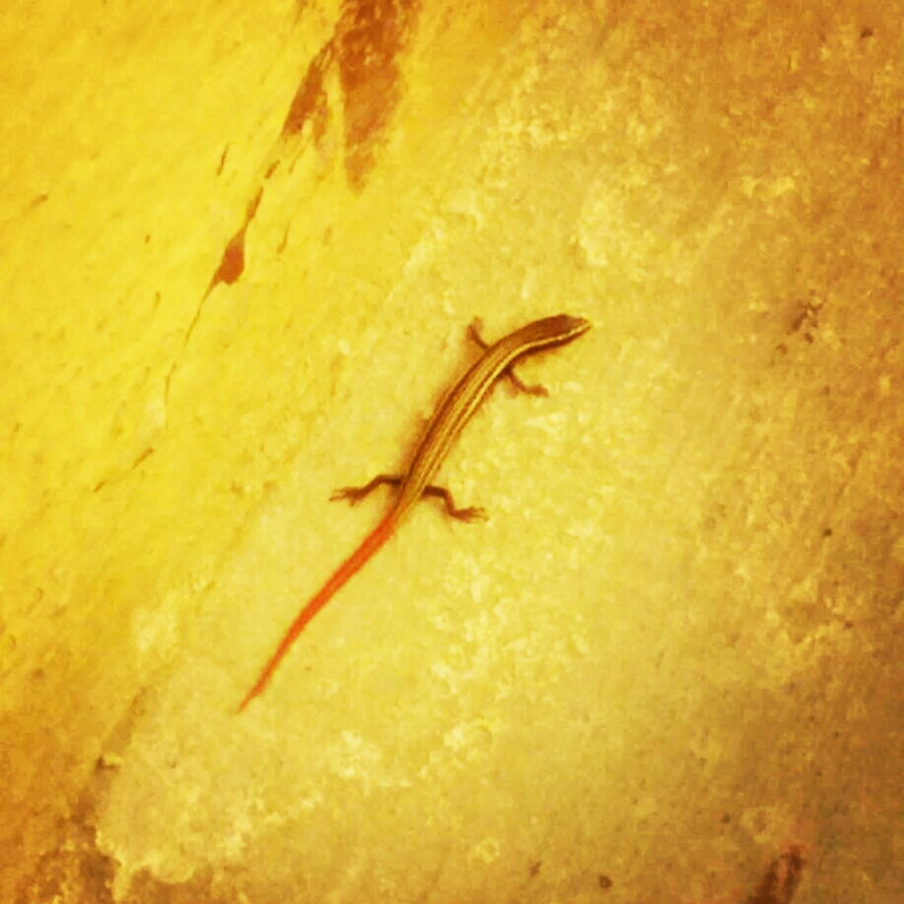 Exotic lizard... Lizard Love Exotic Creatures Colorful