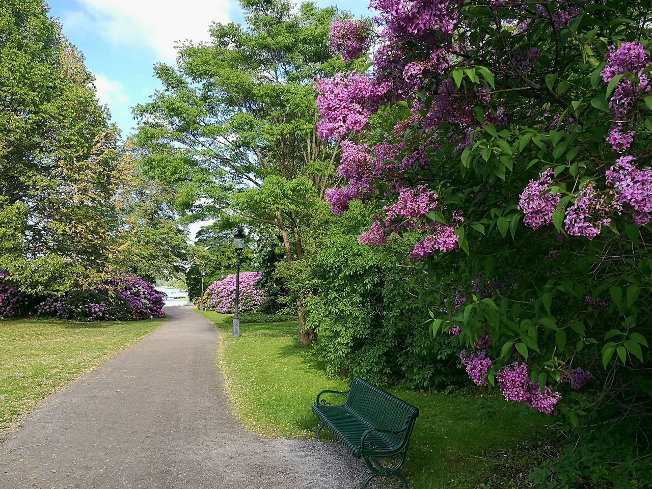 Djurgården Stockholm Sweden Park Park - Man Made Space Nature Beauty In Nature Outdoors Flower Growth Day Tree Shadow Blossoms  Blossoming  Lilacs Bench Park Bench Trees Path Park Path Smartphone Photography Grass Freshness Lilac Blossoms