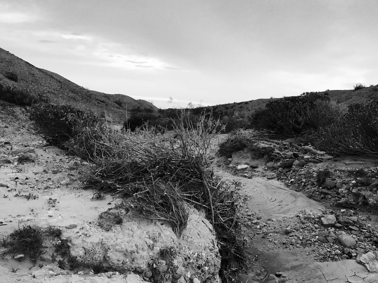 Nature Sky Tranquil Scene Outdoors Growth Landscape Non-urban Scene Scenics No People Day Beauty In Nature Black And White Photography Desert Photography Geological Landscape No Filter, No Edit, Just Photography