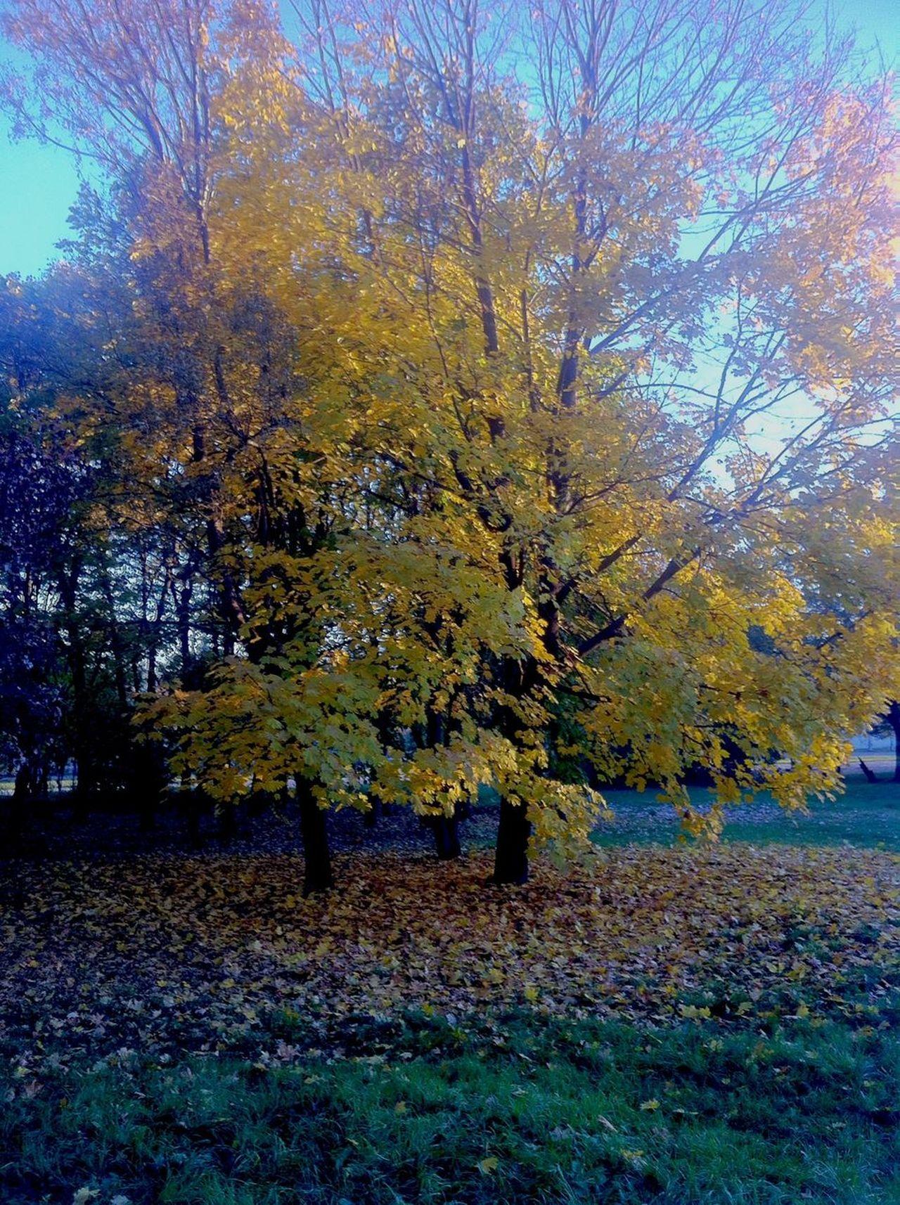Autumn🍁🍁🍁 Fotografia Butiful Nature Good Day Mooring Autumn Leaves Good Times
