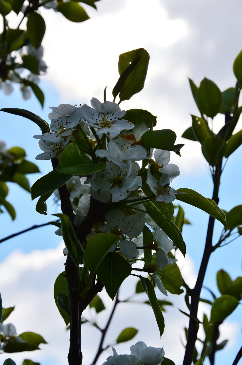 flower, growth, leaf, tree, nature, low angle view, fragility, freshness, beauty in nature, branch, petal, day, no people, green color, outdoors, plant, focus on foreground, springtime, sky, close-up, flower head, blooming, animal themes