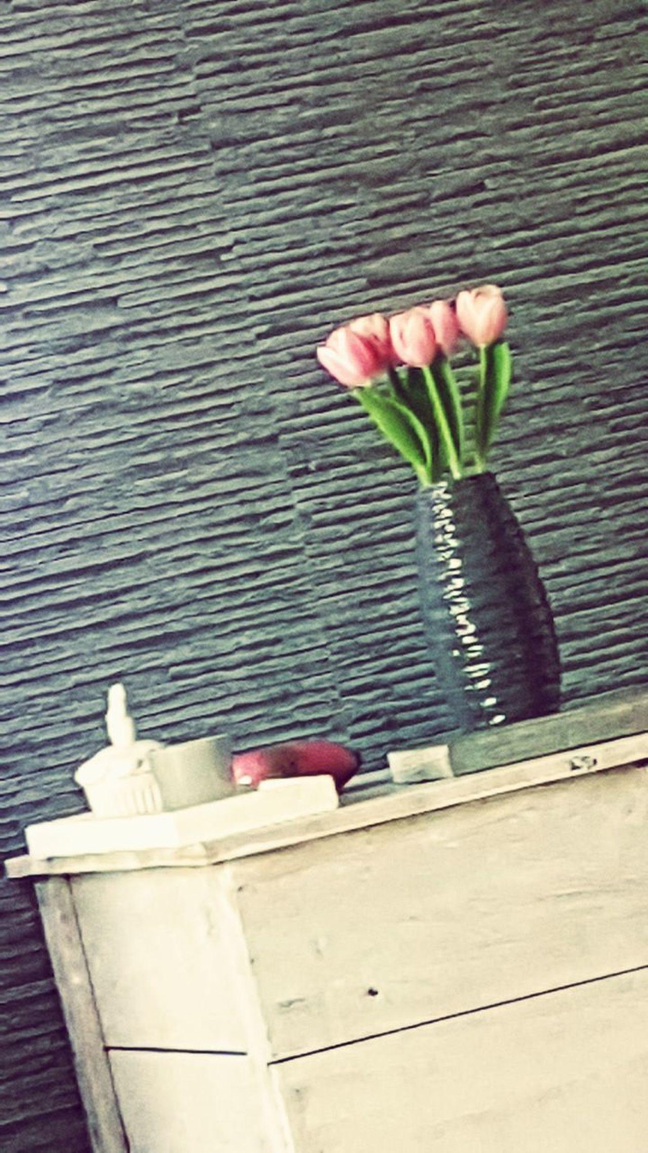 Flowers Springtime Growing Flower Plant No People Tranquility Beauty In Nature EyeEm Nature Lover EyeEmbestshots EyeEm Best Shots Millennial Pink