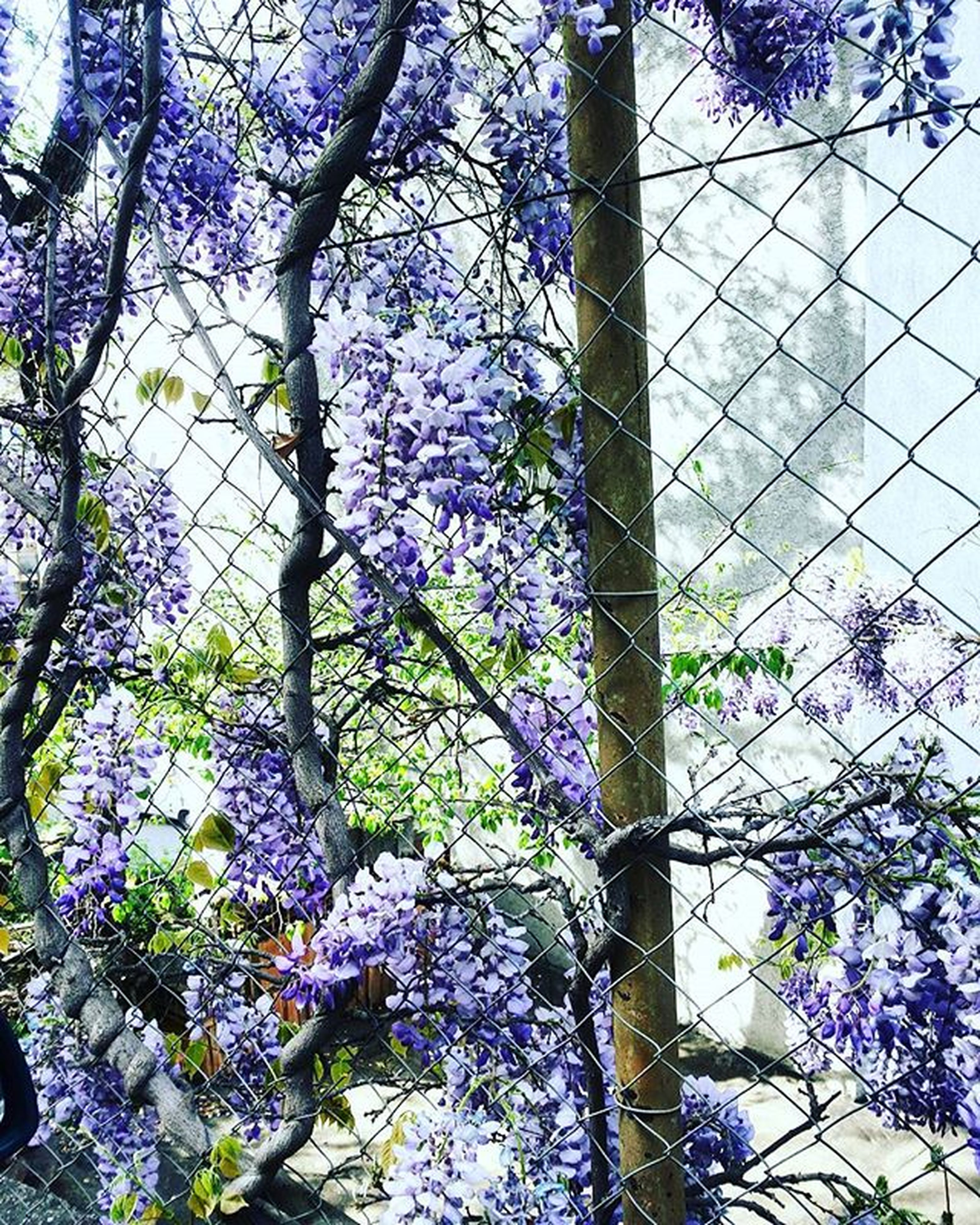 flower, growth, branch, tree, fragility, freshness, nature, tree trunk, purple, plant, beauty in nature, blossom, blue, low angle view, blooming, in bloom, day, no people, built structure, outdoors