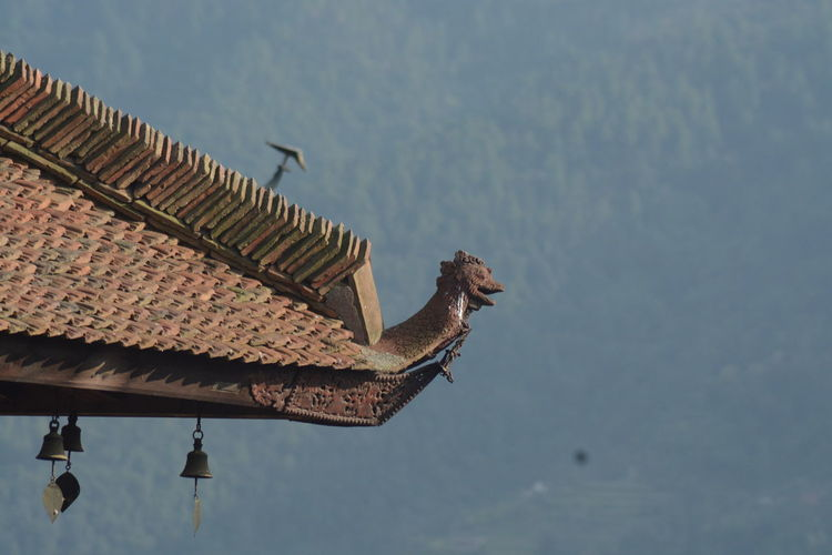 Nepal Temple Animal Themes Animal Wildlife Animals In The Wild Architecture Bird Building Exterior Built Structure Day Low Angle View Nature Nepali Culture No People One Animal Outdoors Perching Roof Sky Spread Wings Temple Photos Tiled Roof