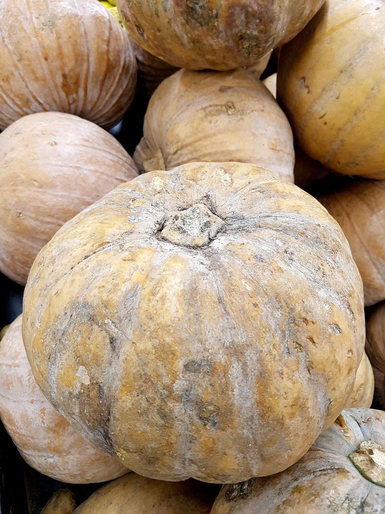 Full Frame Textured  Nature Backgrounds Close-up Agronomy Agriculture Agricultural Plants Still Life Large Group Of Objects Pattern Pumpkins