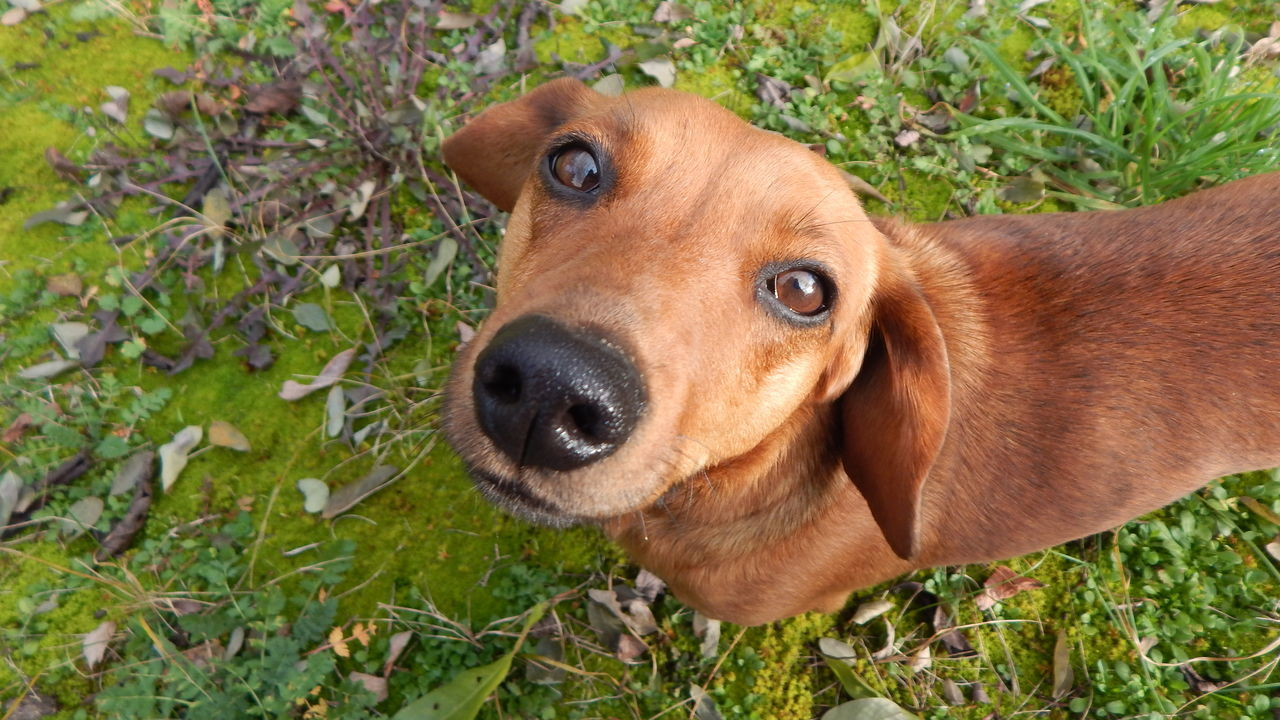 High Angle View Portrait Of Dog On Field