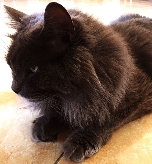 Zufolo Felino Gatto Gatto😸 Cat♡ Cats Cat Lovers Cat Felinos