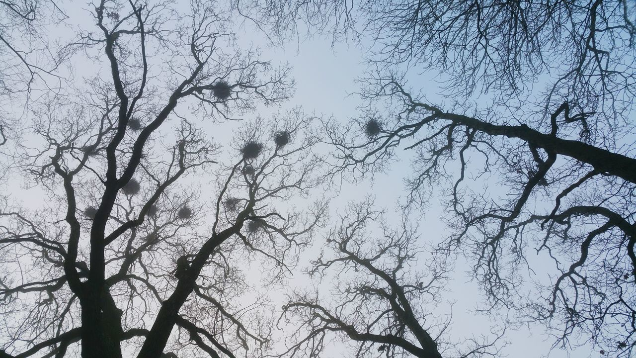... Crows Nests ... Tree Sky Low Angle View Nature Full Frame Growth Branch Backgrounds Beauty In Nature Adapted To The City Outdoors Silhouette Day Tranquility Fog Foggy Park Trees Nests Looking Up Sky Treetops Winter Newtown Powys