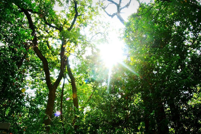Sunlight Breakthrough Trees Nature Sunlight Sun Sunbeam Beauty In Nature Tranquility Green Color Outdoors Sky No People Day At The Park  Nature Collection Texas Park Blissful Moments Photographer EyeEmNewHere Texas Photography Nature Photography Beauty In Nature Nature Low Angle View Travel Destinations Illuminated