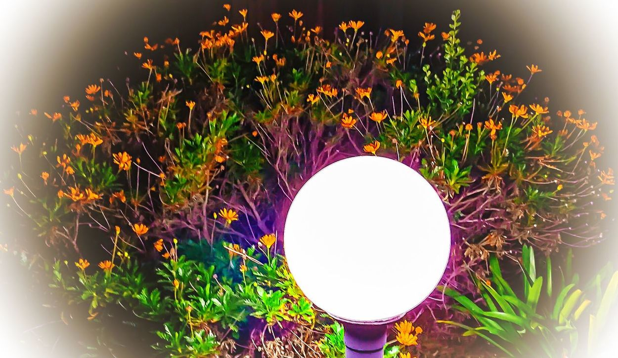 Everyday Joy Light Foggy Night Flowers Night Nightlight