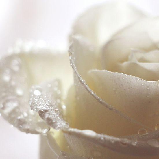 Bokeh Bokehlicious Bokeh Photography Macroclique Macro Macro_collection Macro Photography EyeEm Best Shots Beautiful Flowers
