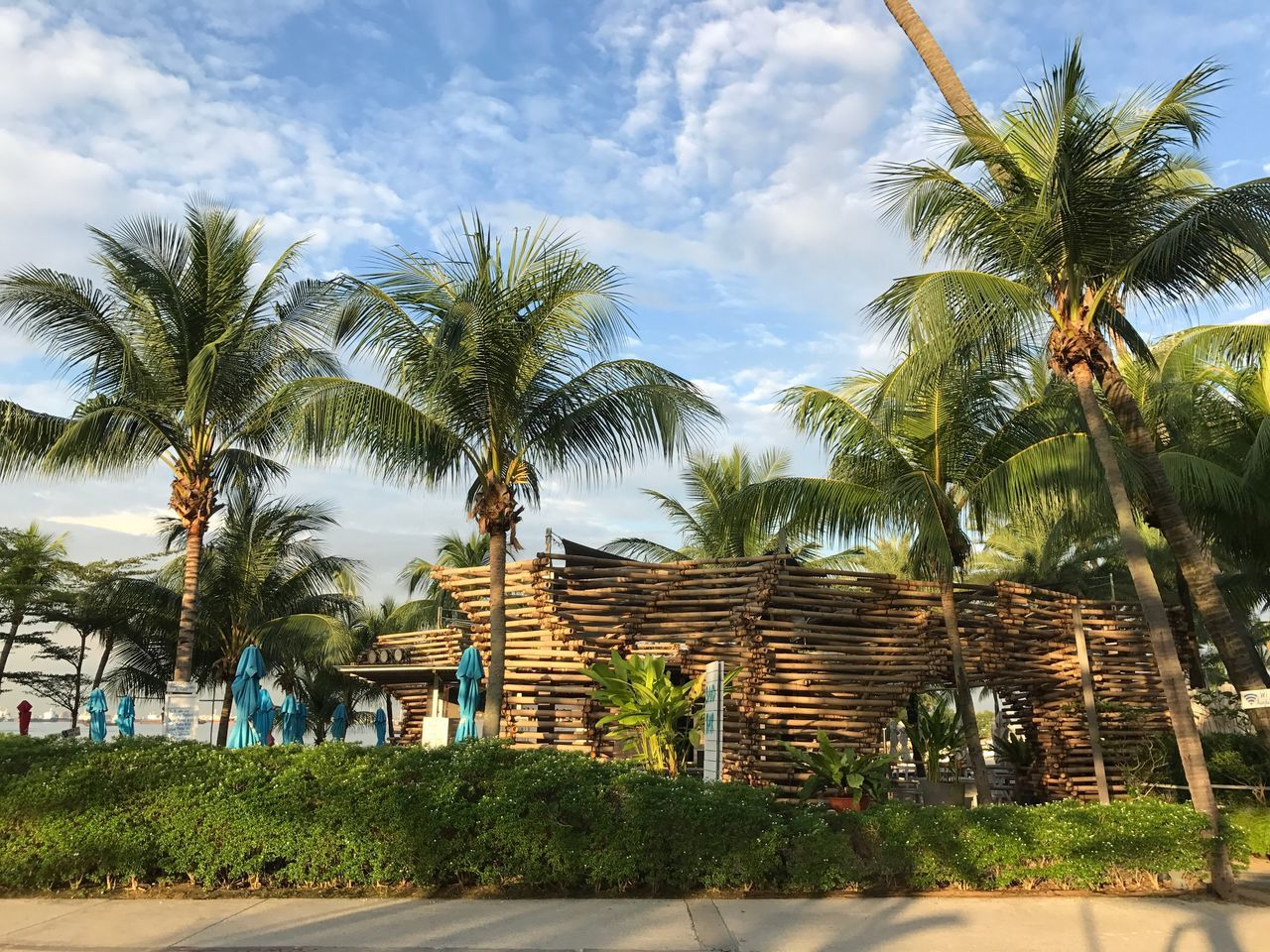 Palm Tree Tree Tropical Climate Growth Cloud - Sky Travel Destinations No People Sky Day Architecture Outdoors