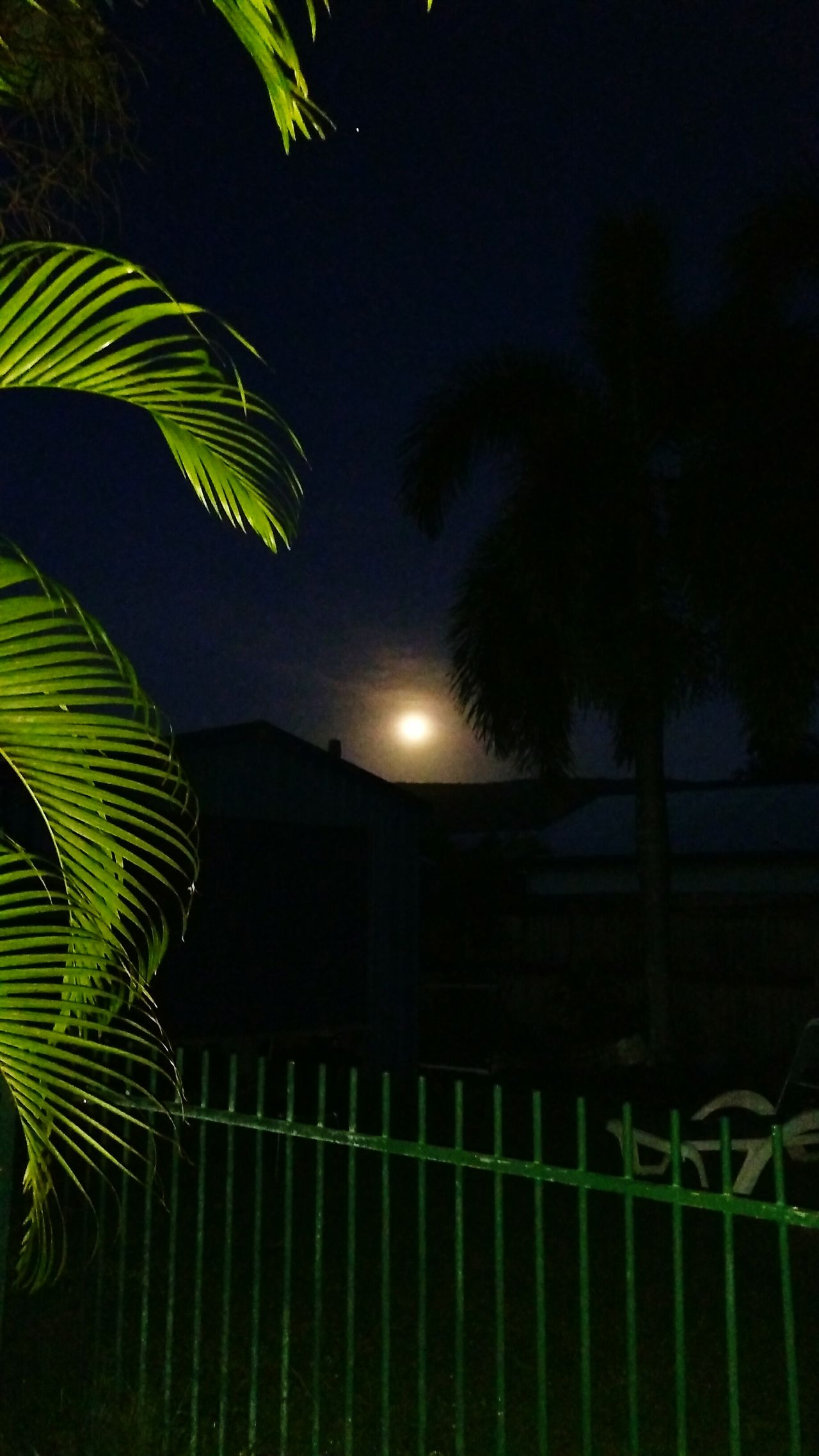 Outdoors, Outside, Open-air, Air, Fresh, Fresh Air, Night No People Moon Beauty In Nature Neighborhood Sky Palm Tree Garden