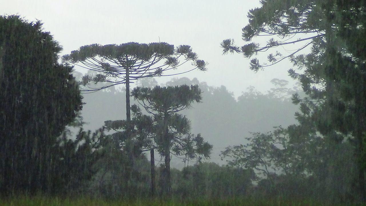 Chuva Natureza Rain Rainy Day Dias De Lluvia Naturaleza Naturelovers Tree_collection  Landscape_Collection
