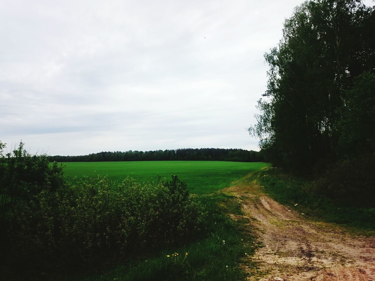 tree, grass, nature, landscape, field, growth, tranquil scene, green color, tranquility, scenics, beauty in nature, no people, agriculture, plant, day, sky, rural scene, outdoors