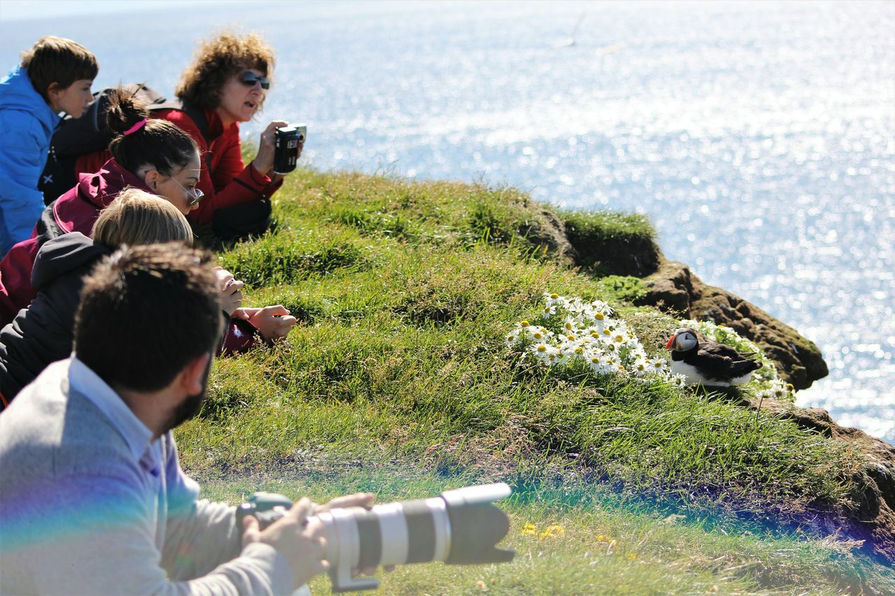Animal In Focus Iceland One Animal Photographer In Action People Again Animal Puffin Bird Bird Photography Birdwatching The Great Outdoors - 2017 EyeEm Awards Latrabjarg Neighborhood Map EyeEmNewHere Live For The Story