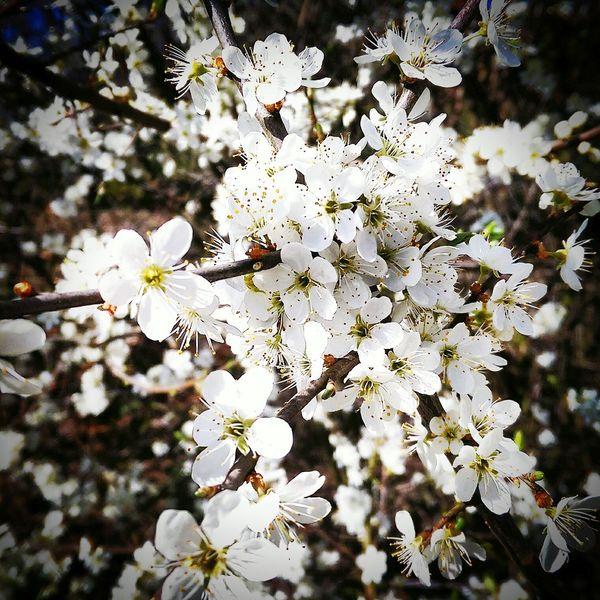 Spring Flowers Blossom Sunny Day