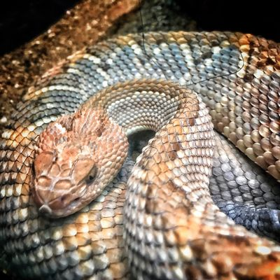 In it's silence. Reptile Animal Scale Snake Silence Fatal Bite Throughmyeyez Close-up In A Day No People In Color