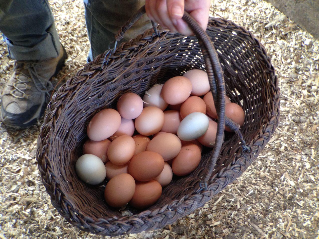 Beautiful stock photos of farm, Abundance, Basket, Close Up, Diet