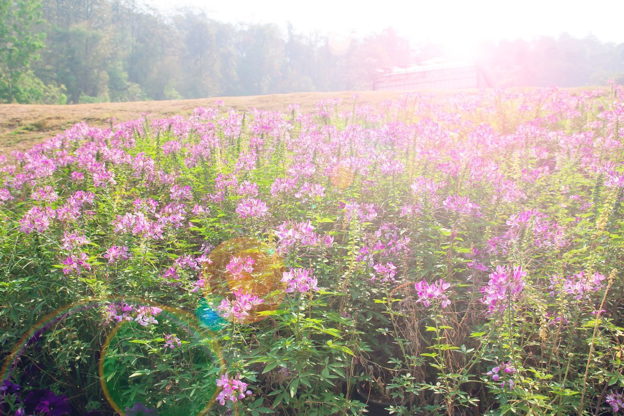 Background Beautiful Beauty Beauty In Nature Breath Copy Space Day Field Flower Freshness Growth Landscape Nature No People Outdoors Ozone Plant Purple Flower Scenics Violet Flowers