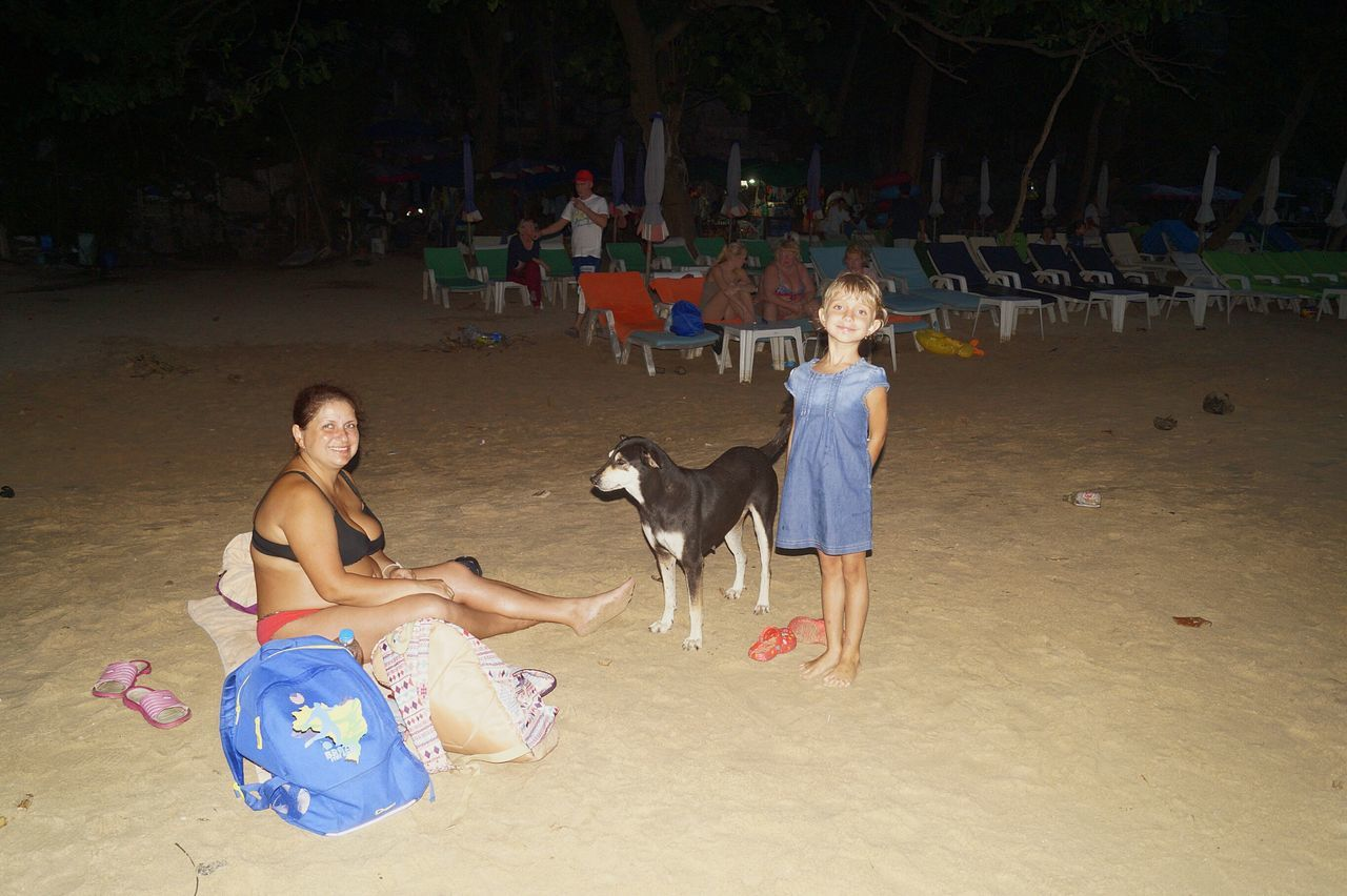dog, one animal, pets, animal themes, domestic animals, sand, beach, mammal, full length, sitting, real people, playing, two people, outdoors, friendship, day, young adult, people, adult