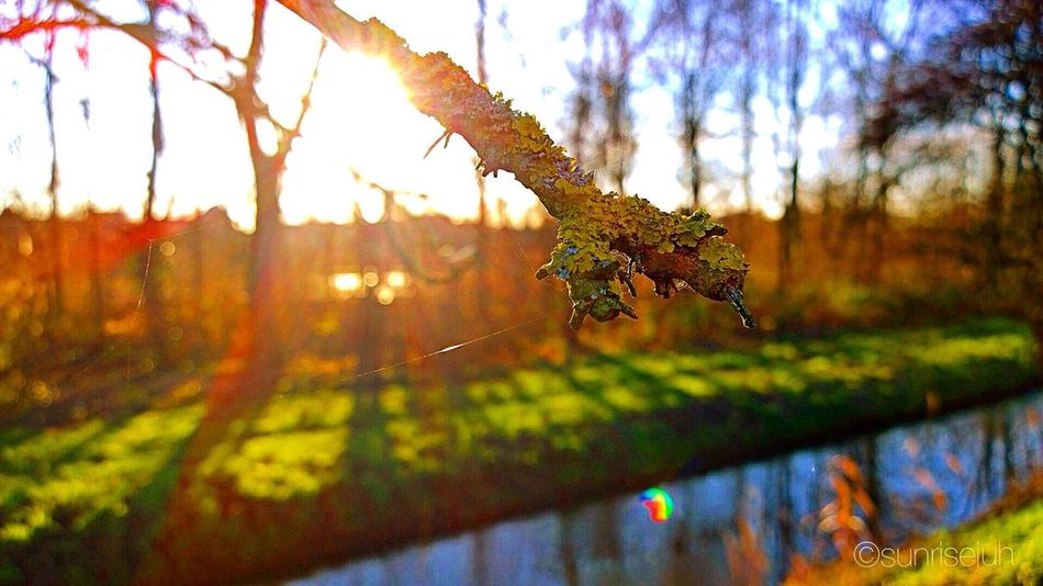 Twig Enjoying Life Enjoying The Sun Enjoying Nature Scenery Warmlight Walkabout Warmwinterday Sunlight Naturelover Dike Flair Shades Of Winter