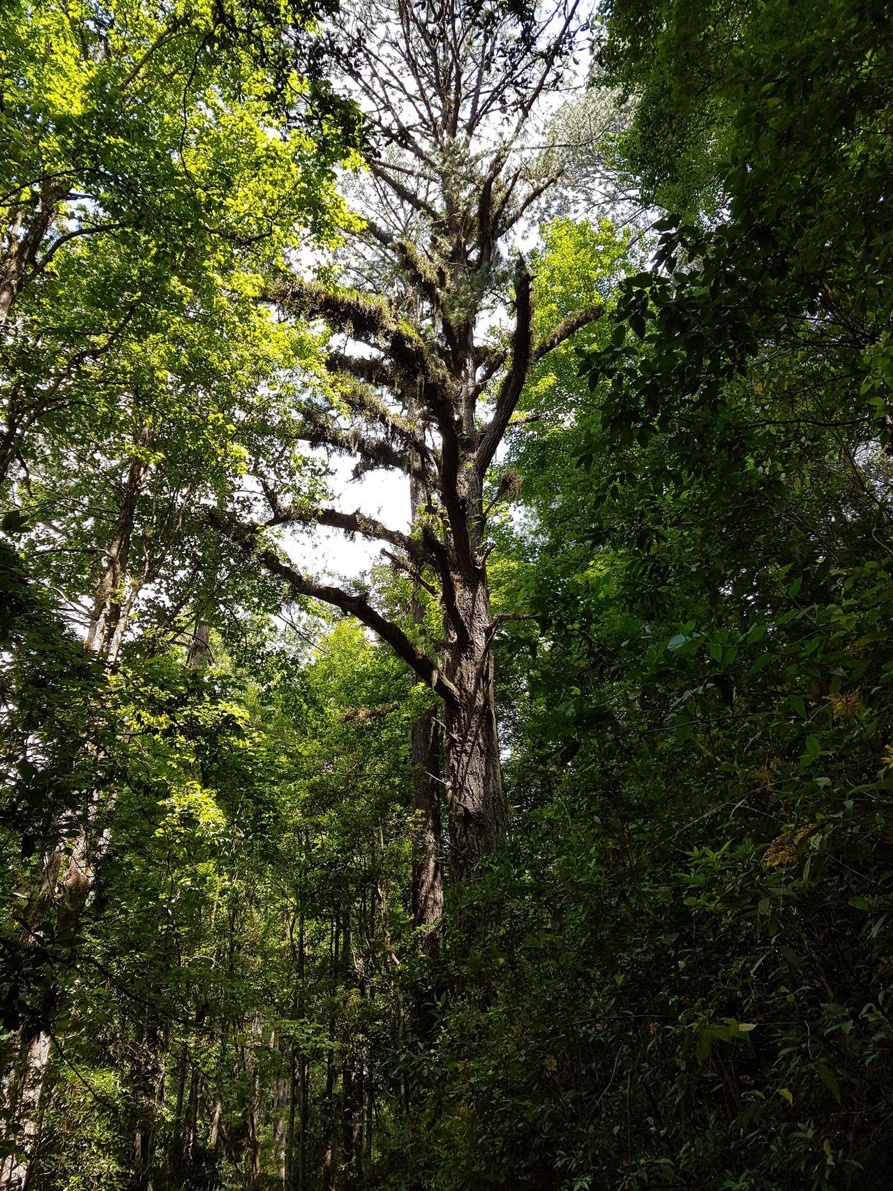Nature Photography Honduras