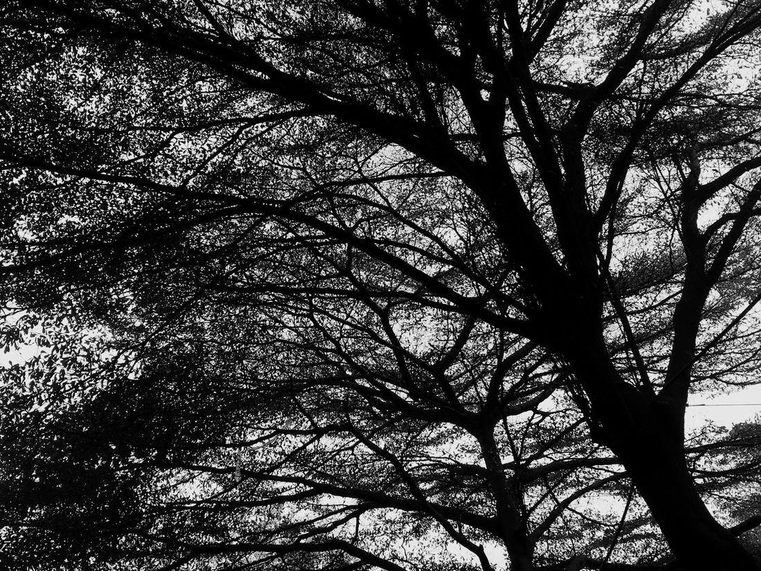 ผีสางนางไม้ 🧟♂️🧟♀️🧞♂️ Suicide Forest Tree Branch Nature Low Angle View Outdoors Beauty In Nature Growth Tranquility No People Scenics Bare Tree Tree Trunk Sky Forest Backgrounds Day