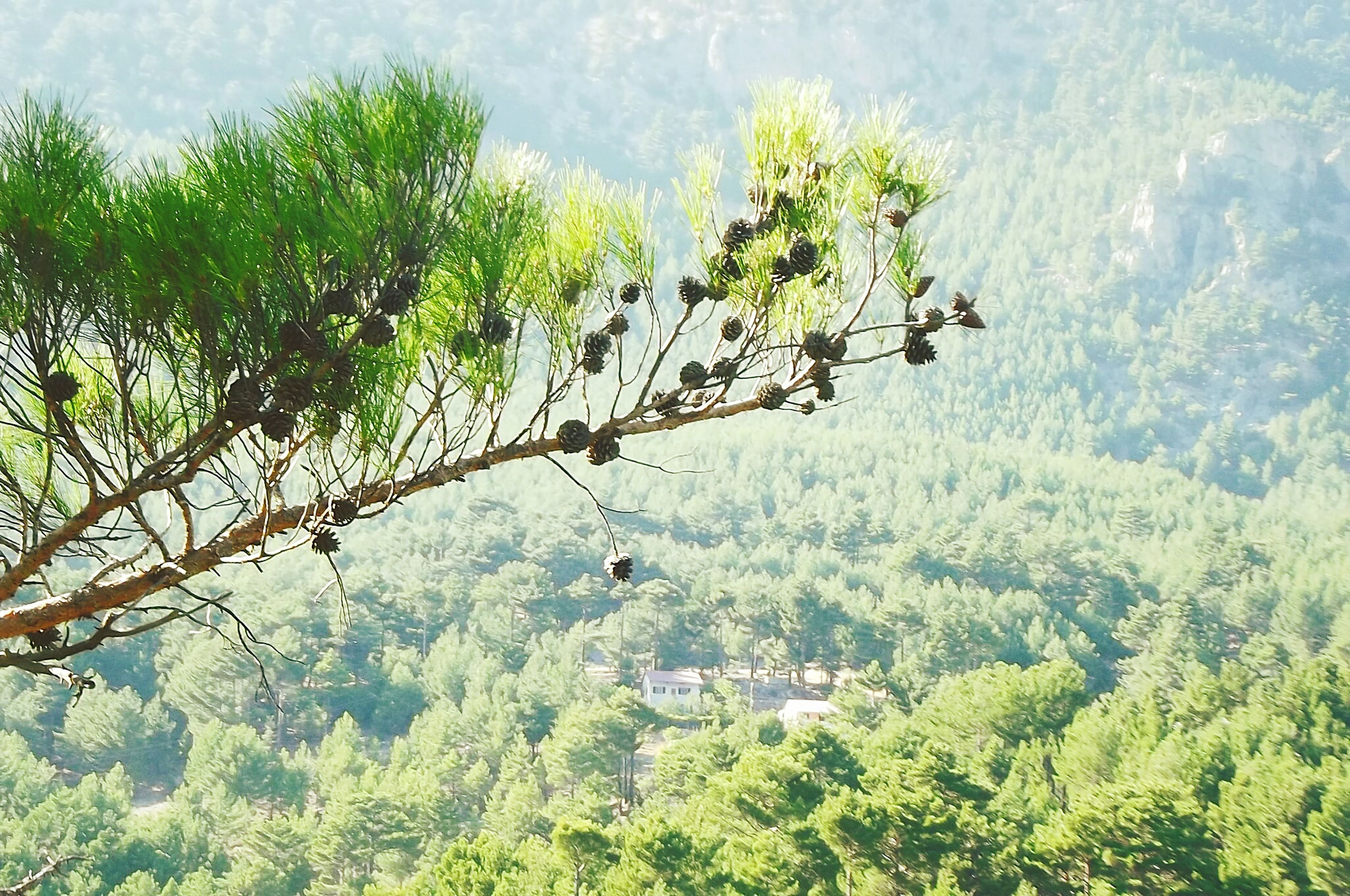 tree, growth, nature, tranquility, green color, sky, plant, tranquil scene, day, high angle view, branch, low angle view, beauty in nature, scenics, transportation, landscape, outdoors, non-urban scene, mode of transport, no people