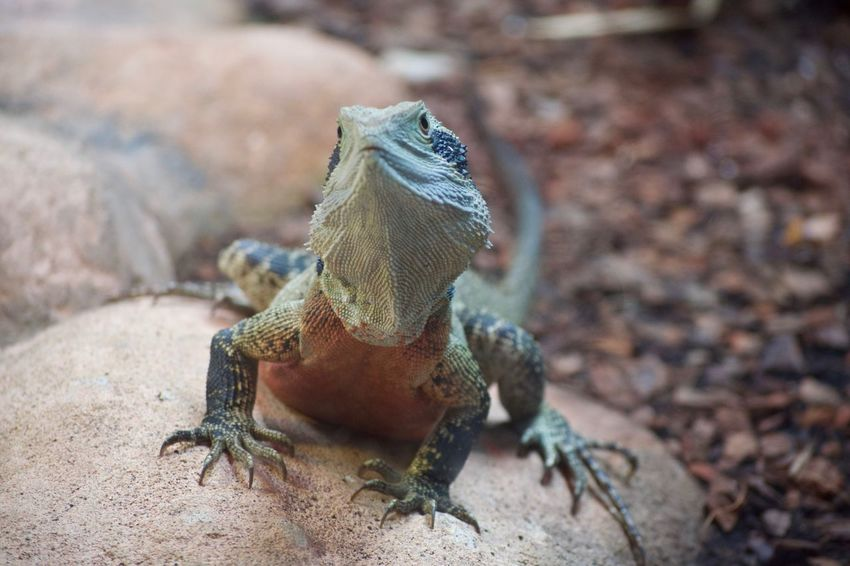 Animal Themes Animal Wildlife Animals In The Wild Beauty In Nature Close-up Day Nature No People One Animal Outdoors Reptile