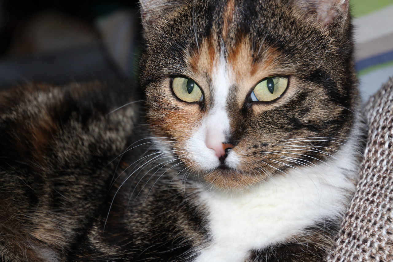Looking At Camera Cat Open Edit Tadaa Community Animal Themes No People Mammal Animal Photography Outdoors Leopard Kitty Animal Body Part Domestic Cat One Animal Portrait Eye4photography  AMTPt_community From My Point Of View Color Of Life Eyeem Best Shots - Animals
