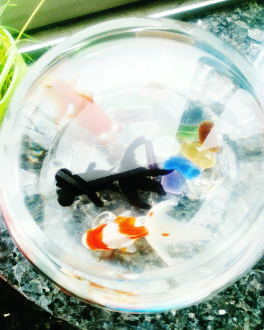 water, goldfish, fishbowl, fish, food and drink, no people, pets, animal themes, swimming, close-up, indoors, day, nature, freshness