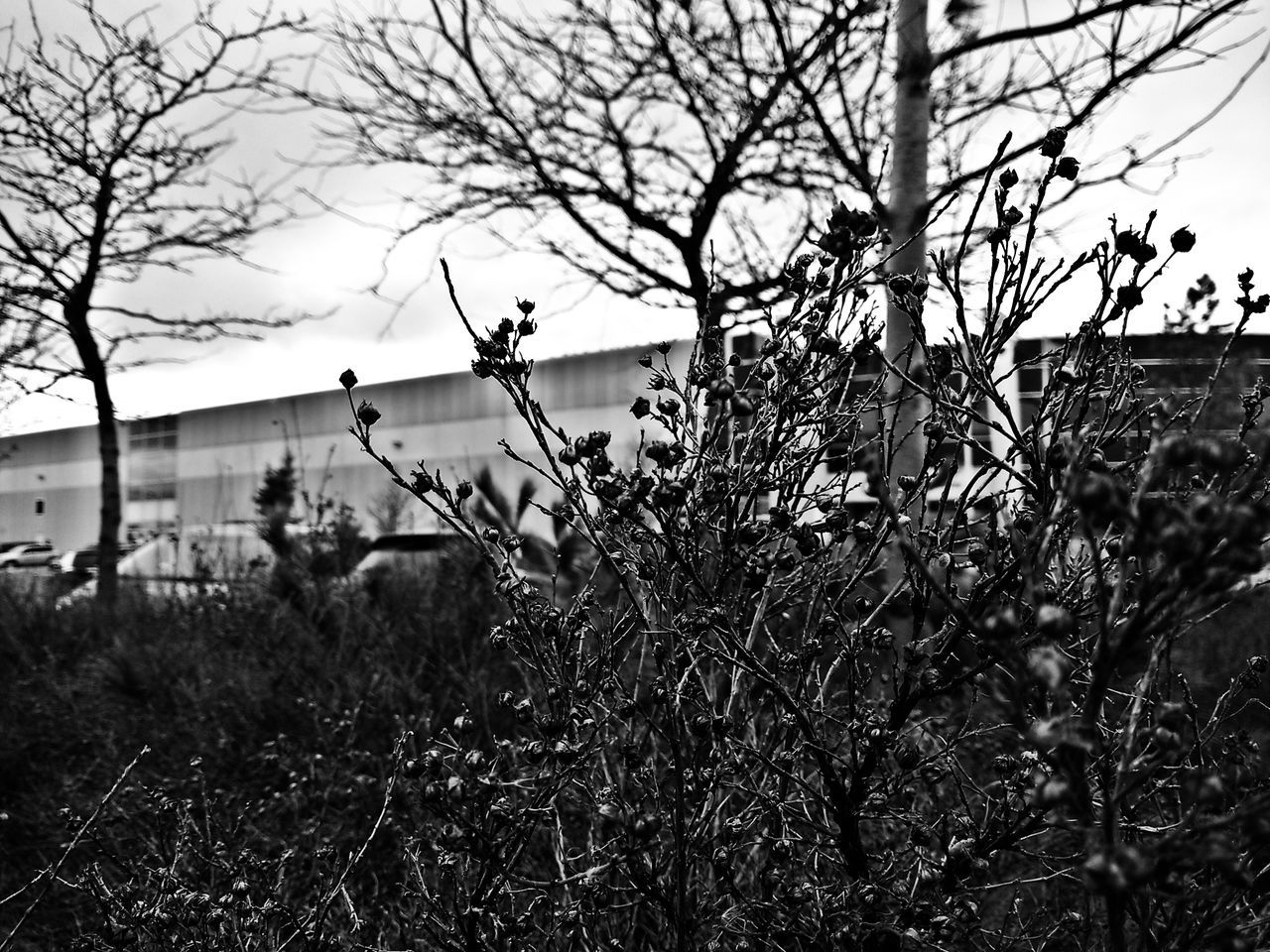 Learn And Shoot Black And White Taking Photos Winter Nature Outside Shrubbery Black And White Nature Photography Black And White Collection  Black And White Photography Ruleofthirds Rule Of Thirds Wintertime Canada Shrubs