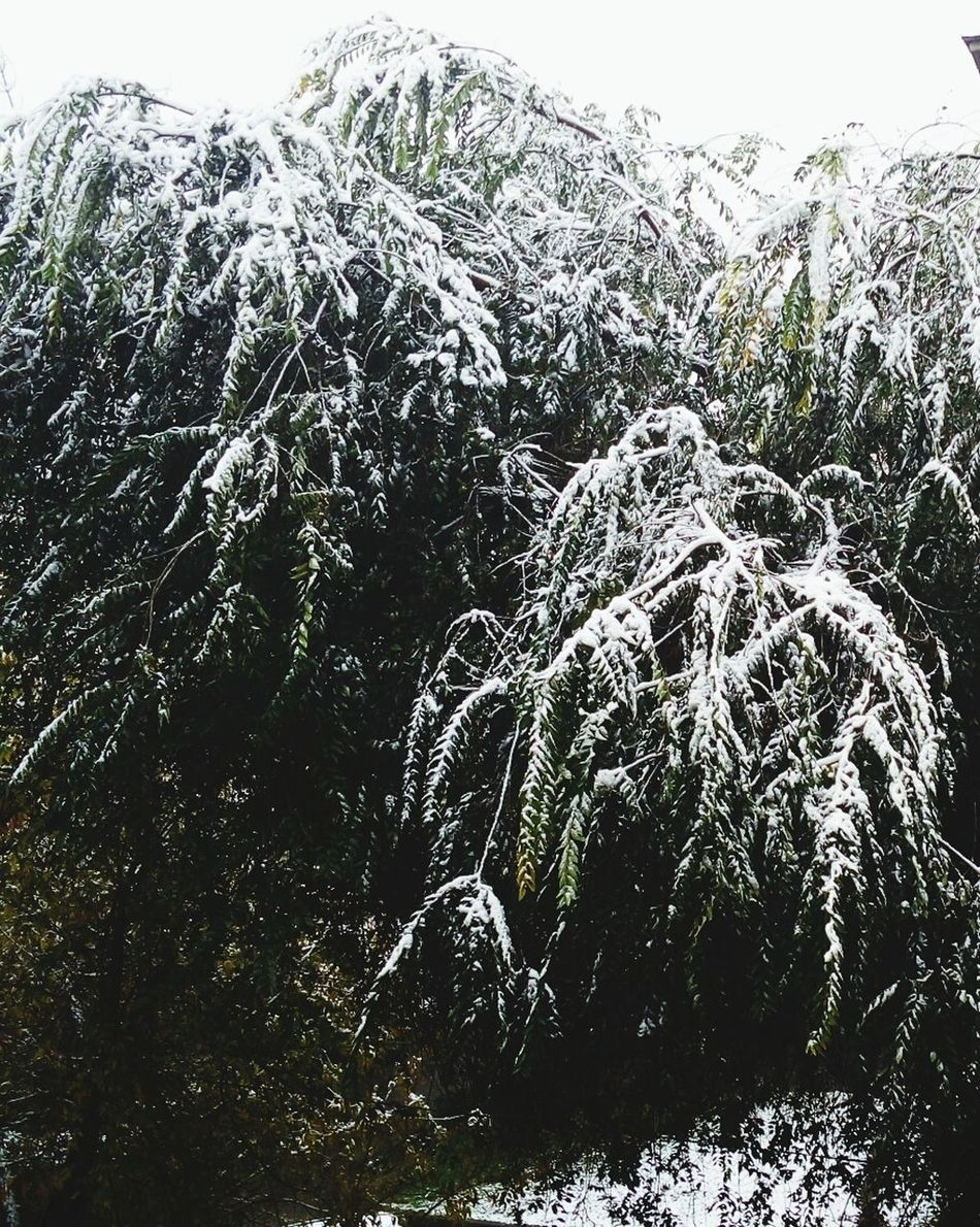 Tree No People Snow Wintertime Winter Cold Temperature Tree Almaty, Kazakhstan