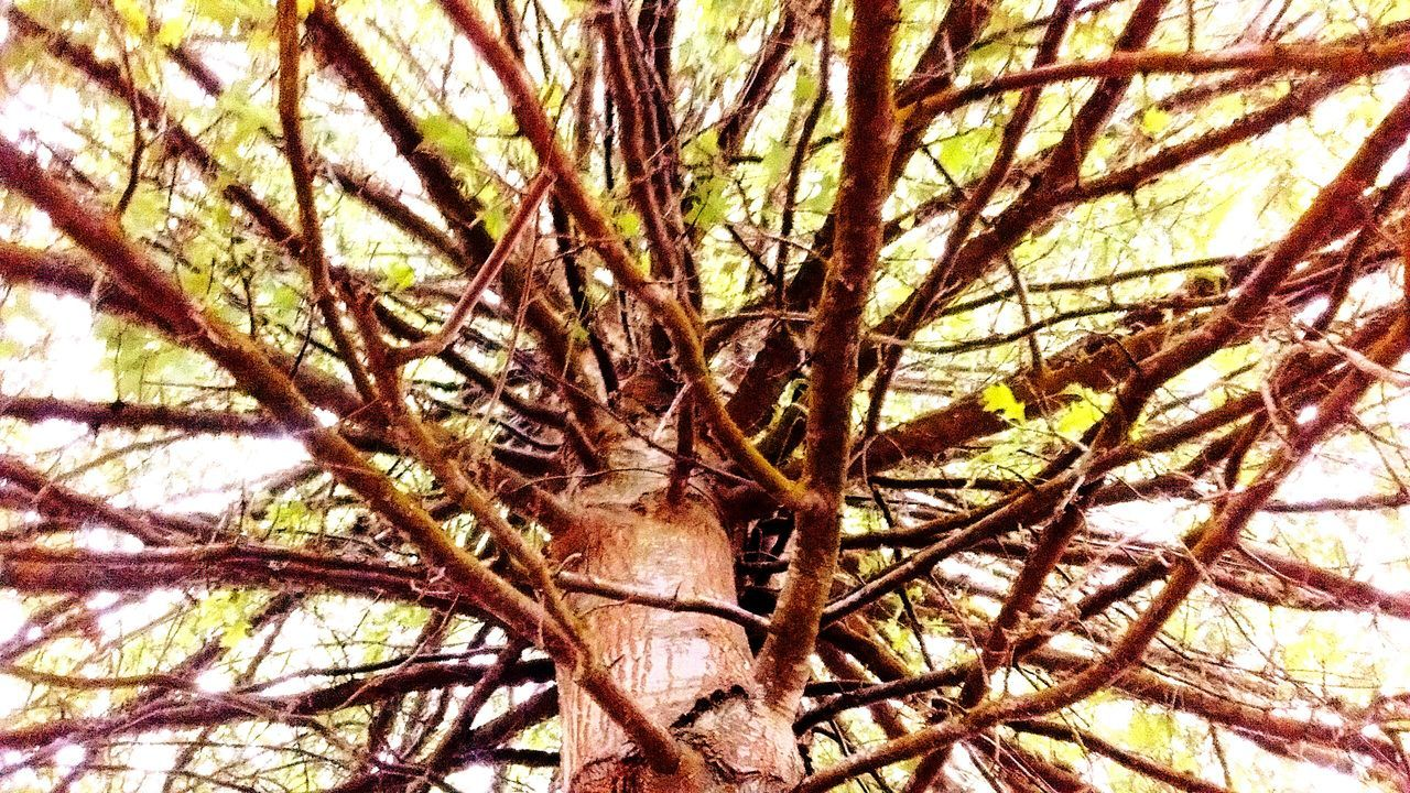 Tree Lover Tree Branches Treehugger Tree_collection