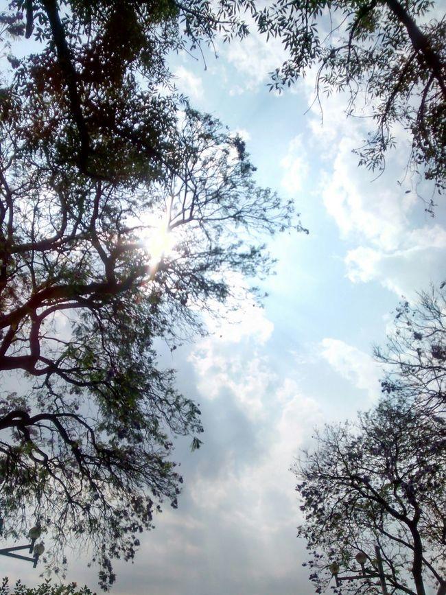 Cielos Naturaleza Sol De Caminata Felicidad
