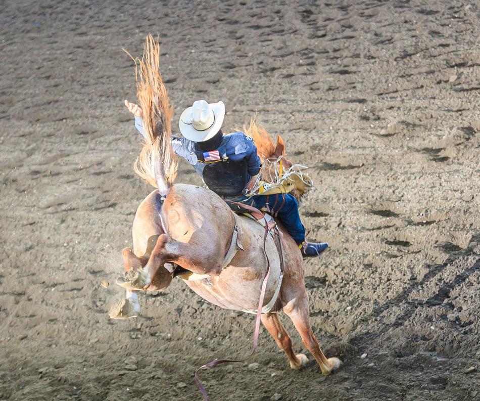 Beautiful stock photos of cowboy, Animal Themes, Balance, Bucking Bronco, Challenge