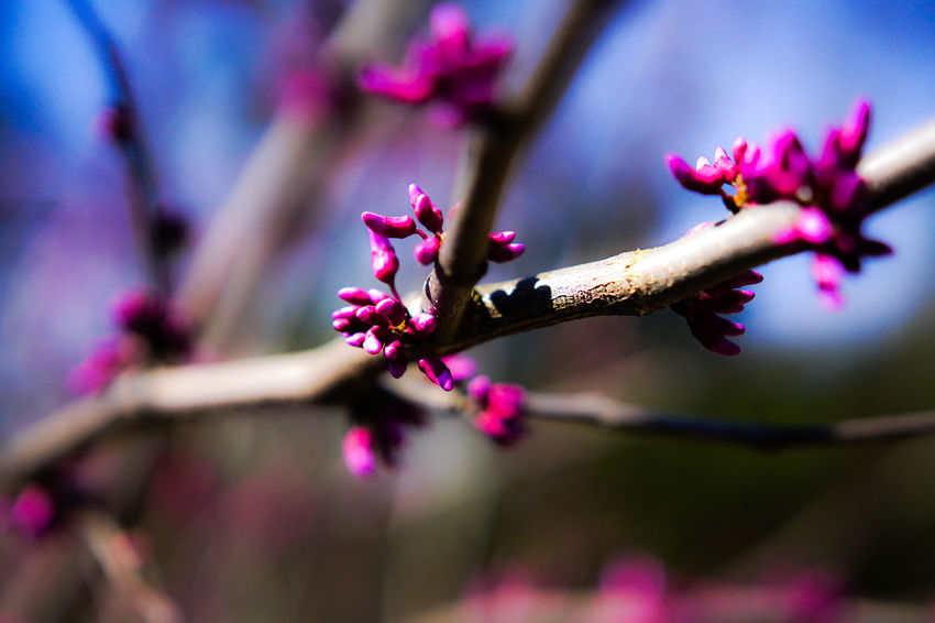 Flower Nature Growth Beauty In Nature Plant Fragility Close-up No People Pink Color Freshness Outdoors Flower Head Day Plum Blossom Millennial Pink