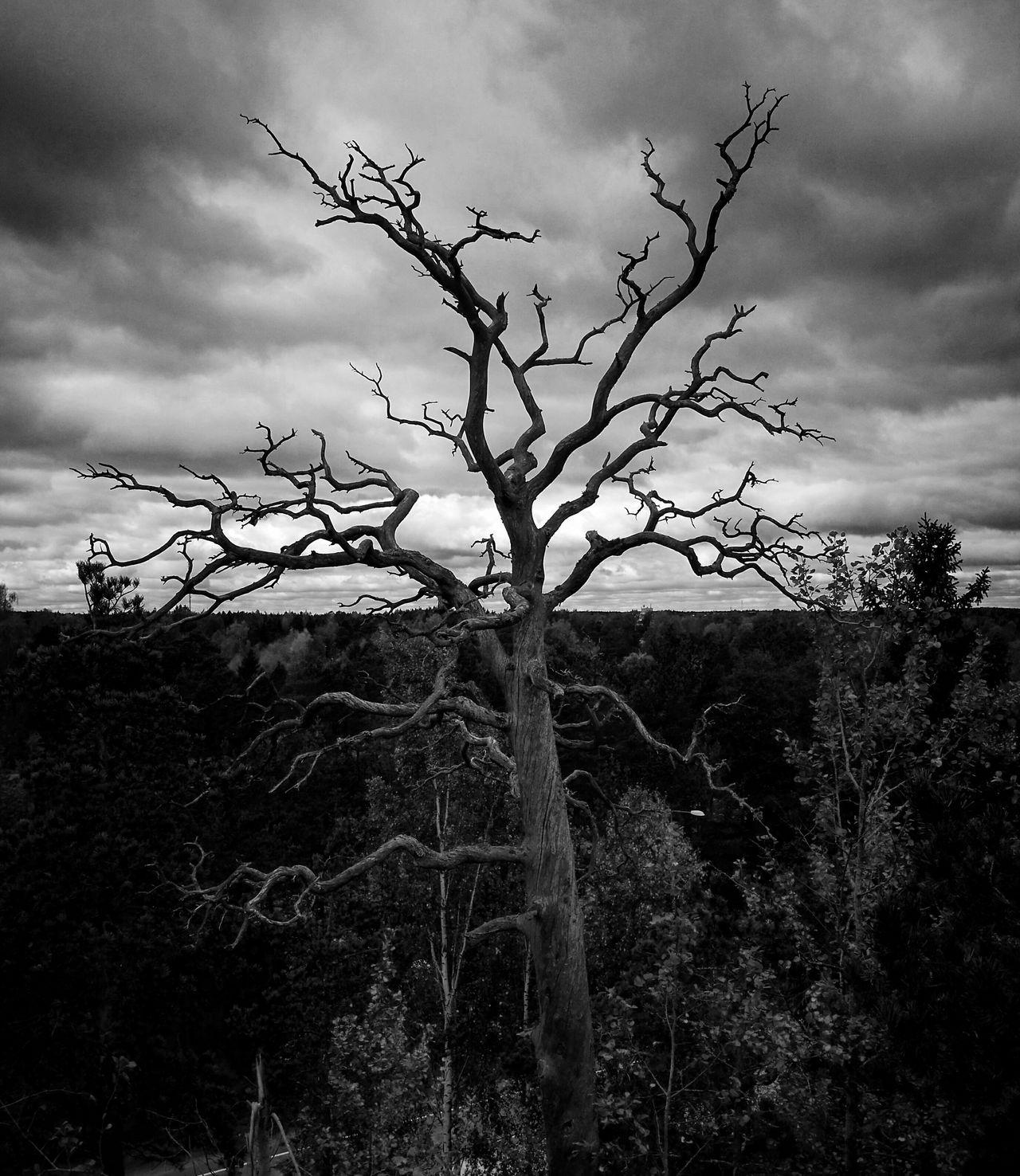 Black & White Nature Photography Alone Time Fridayfeeling