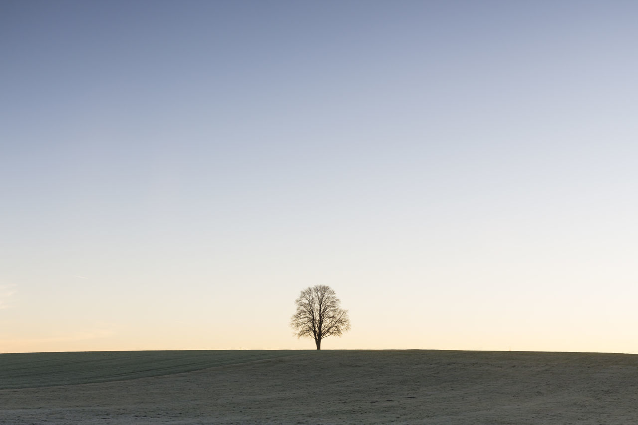 View Of Lone Tree On Landscape Against Clear Sky