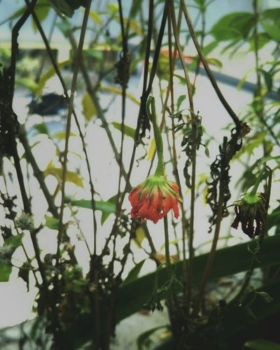 Mysecretgarden Flower Collection Mobile Photography EyeEm Nature Lover