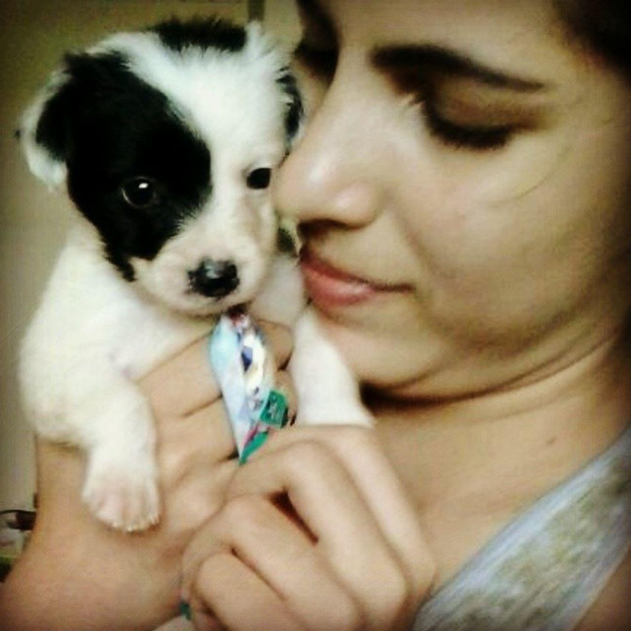 Minha mamãe foi me buscar no pet. Voltei todo feliz do banho com cheirinho de bebê e de gravatinha :) Yupi Instadog Dog Prontopraconhecermeupai hahah