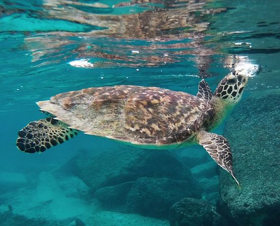 Underwater UnderSea Sea Sea Life Animal Wildlife Snorkeling Beauty In Nature Animals In The Wild Scuba Diving Sea Turtle No People Seychelles Islands Seychelles Seychellen Nature